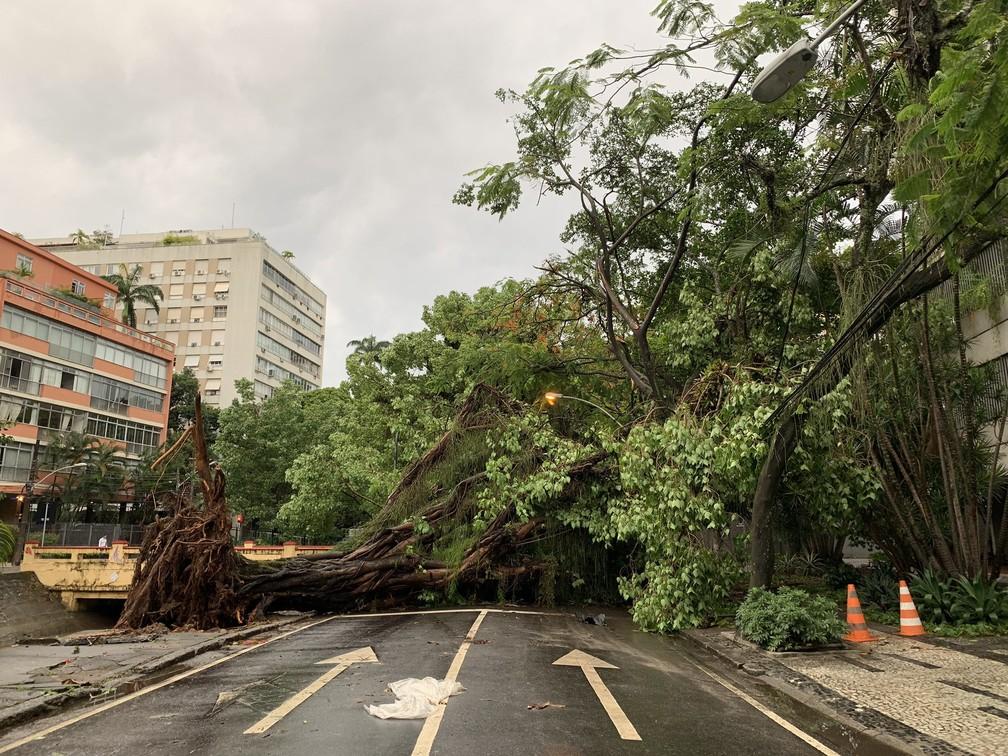Uma árvore gigante caiu na Avenida Visconde de Albuquerque, no Leblon, e interditou a via — Foto: Fernanda Rouvenat/G1