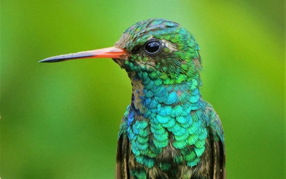 As aves também se renovam a partir da troca de penas — Foto: Ananda Porto/TG