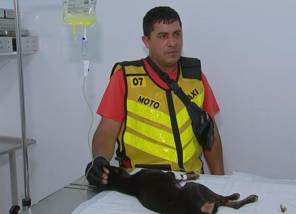 Dono espera que Tiquinho possa voltar logo para casa em Lins  — Foto: TV TEM / Reprodução