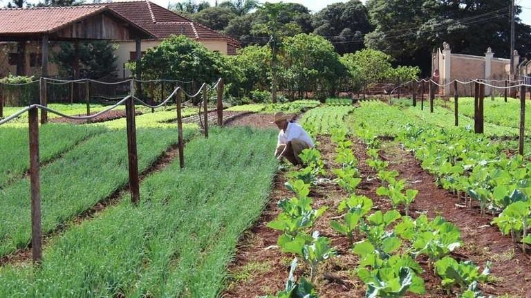 Agricultura familiar (Foto: Divulgação)