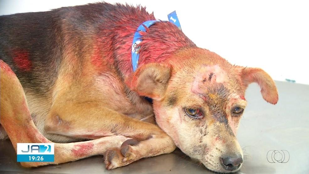 Princesa está fora de perigo após ser atacada com uma marreta — Foto: Reprodução/TV Anhanguera