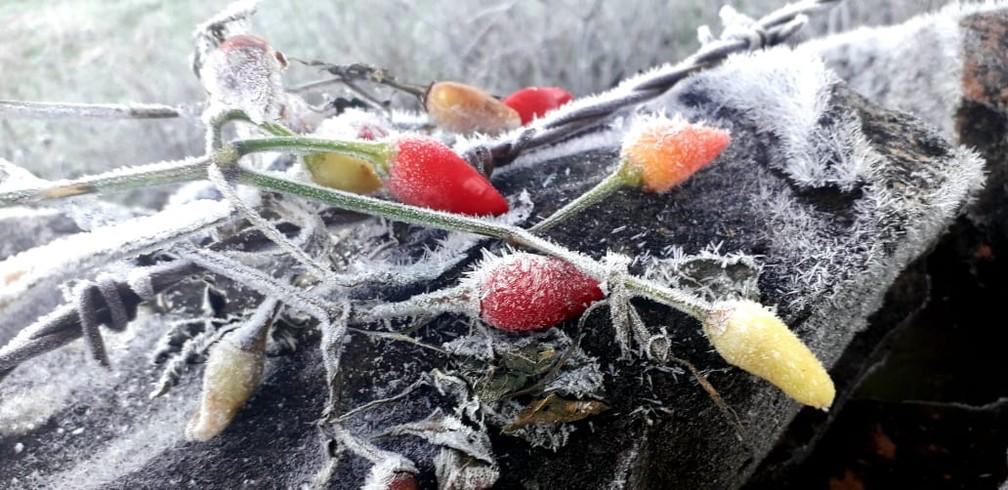 Em Ciríaco, no Norte, dia amanheceu com geada e baixas temperaturas — Foto: Juliano Simioni/arquivo pessoal