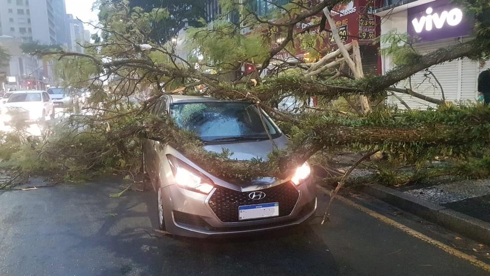 Uma árvore caiu em um carro na Marechal Deodoro, segundo telespectadora — Foto: Maria Vitória Moreira Alves/Você na RPC