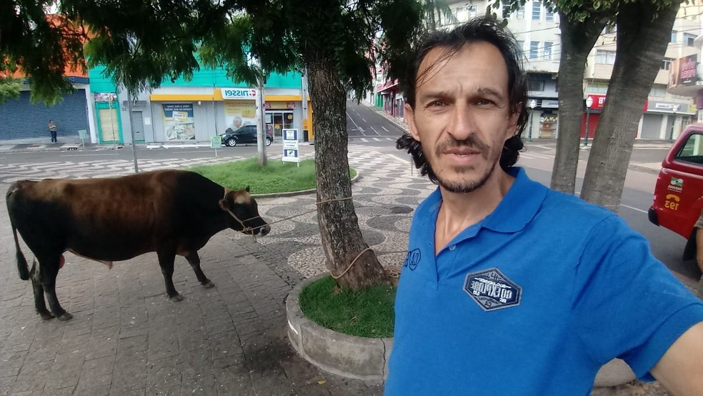 Presença de um boi 'passeando' pelo Centro de Ponta Grossa chamou a atenção de moradores — Foto: Marcelo Gonzalez/Arquivo pessoal