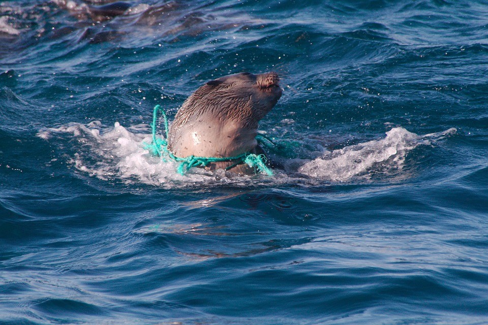 Todos os mamíferos marinhos têm plástico no organismo, diz pesquisa