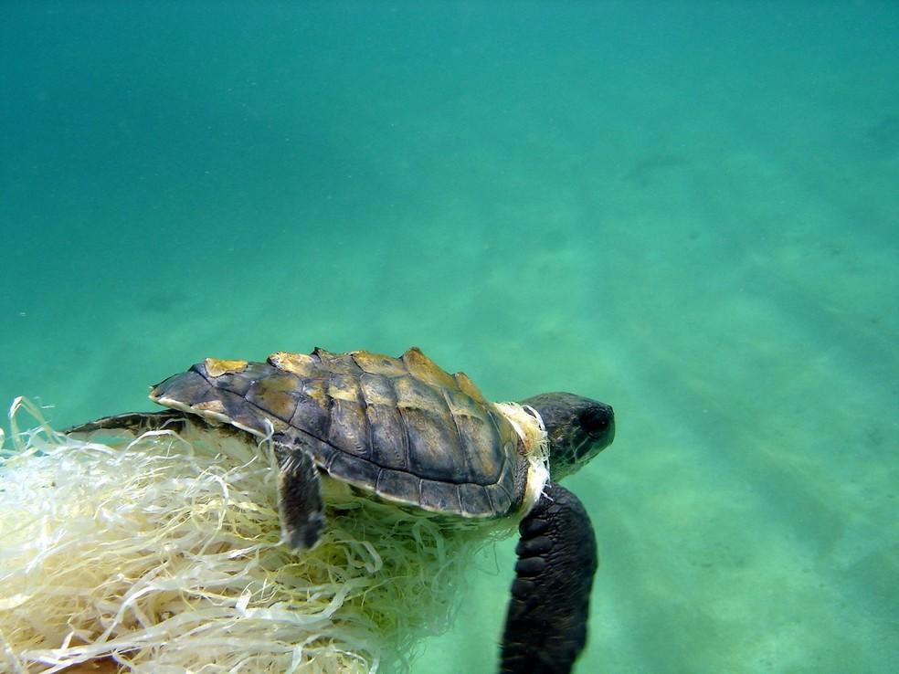 Filhote estava bastante agitada presa a plástico no fundo do mar — Foto: Arquivo pessoal / Enermércio Lima