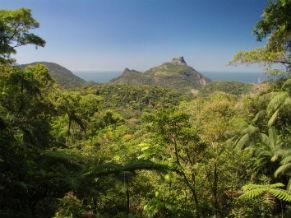 Parque Nacionalda Tijuca  (Foto: Divulgação / Ruy Salaverry)