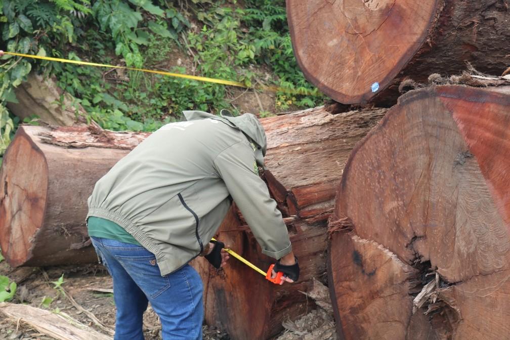 Toras são encontradas em madeireira que não tinha documentação para funcionar em Manicoré — Foto: Divulgação