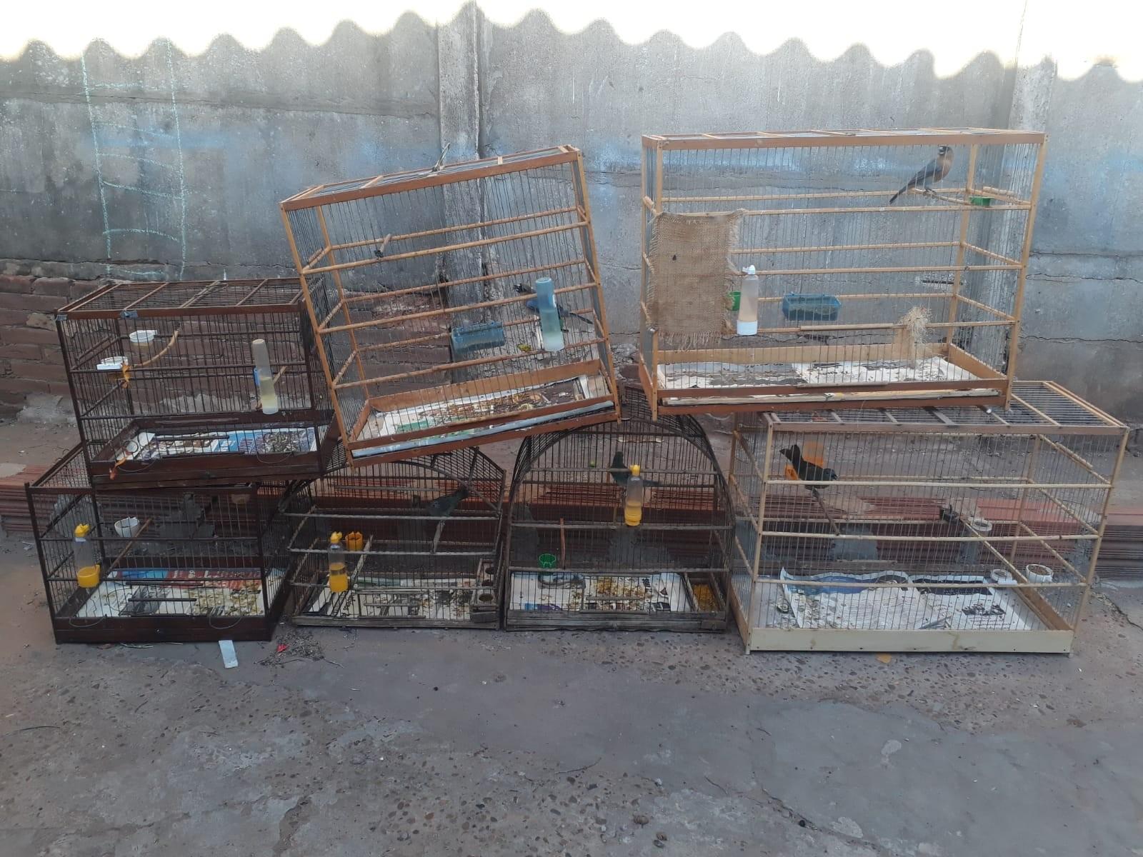 Morador de Adamantina é autuado em R$ 3,5 mil por manter sete aves em cativeiro