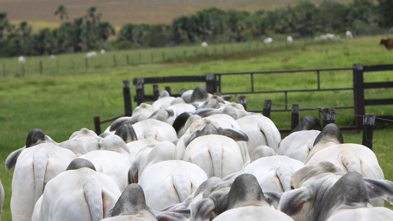 Resultado de imagem para gado e insumos