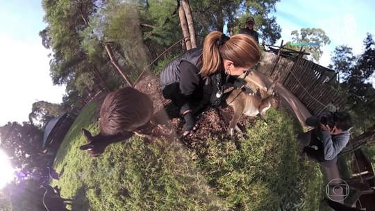 Fant 360: visite santuário para animais como cangurus e coalas na Austrália