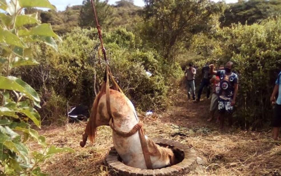 Momento em que cavalo foi retirado de poço em Esplanada, na Bahia — Foto: Divulgação/Corpo de Bombeiros