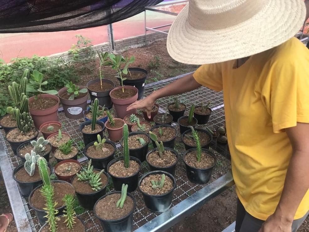 Flores são vendidas para floriculturas e empresas de decoração e de paisagismo — Foto: Nara Assis / Sesp-MT