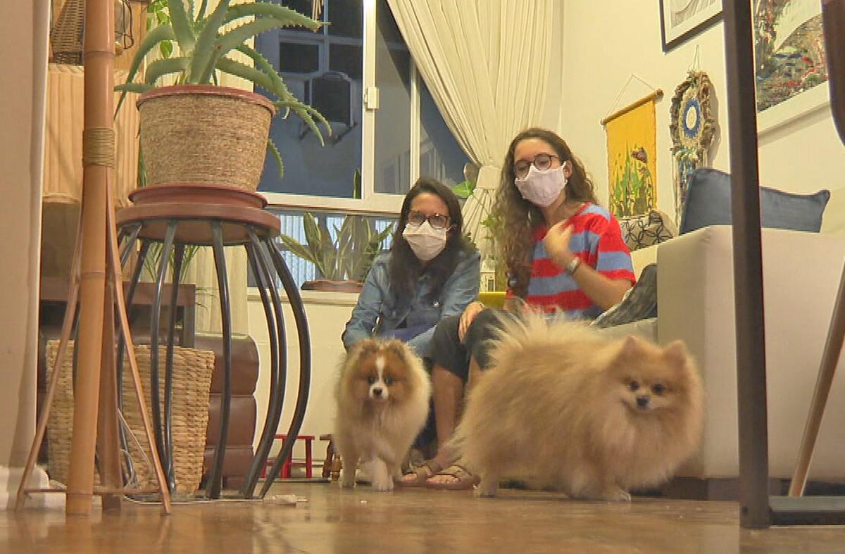 Cães levados em roubo de carro em Botafogo são encontrados e voltam para casa