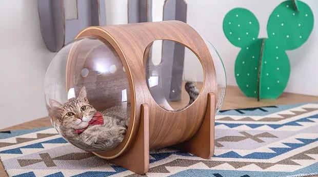 Para bichinhos mais preguiçosos, a cama pode ficar no chão (Foto: Divulgação)