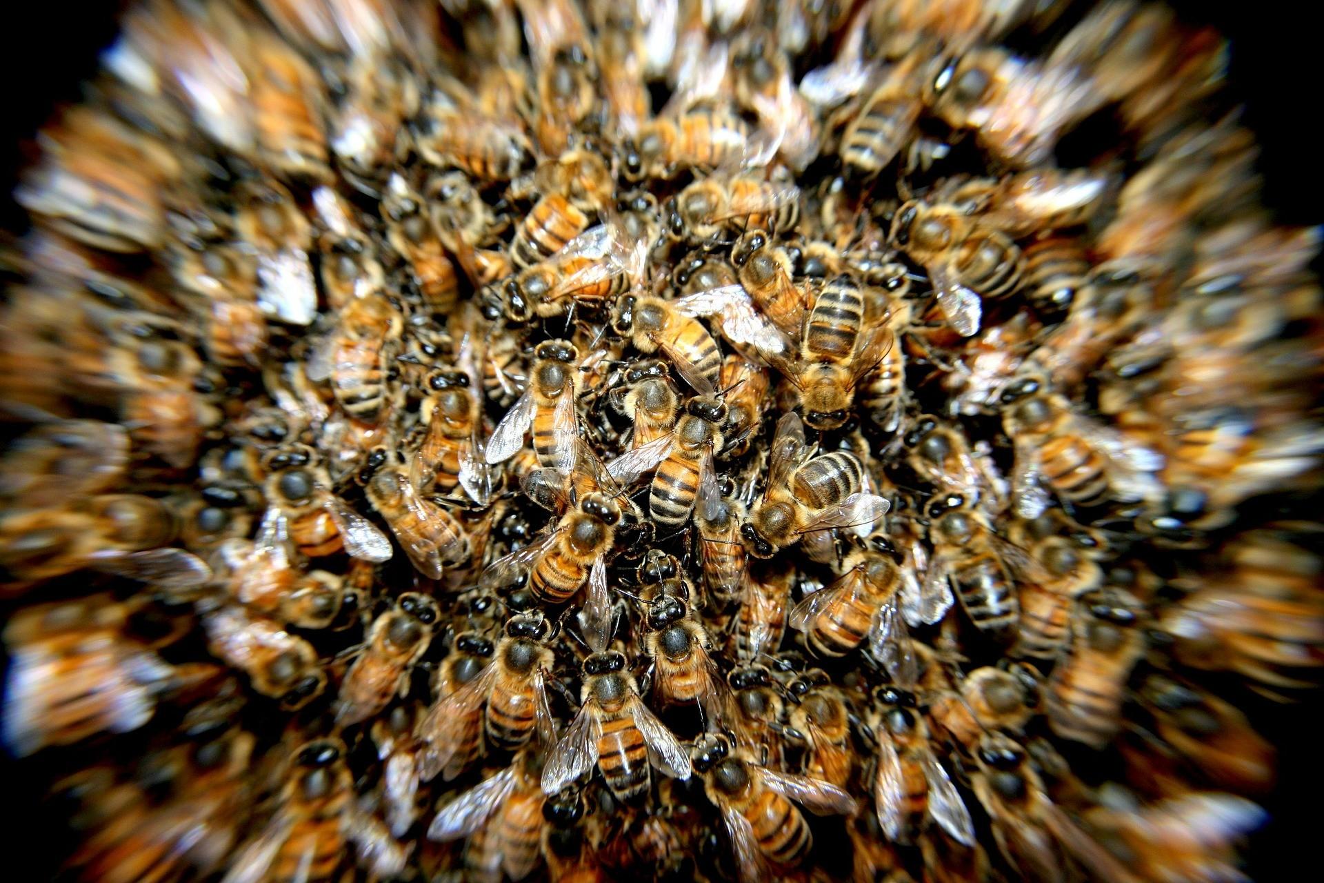 A batalha dos cidadãos comuns em prol das abelhas em todo o mundo