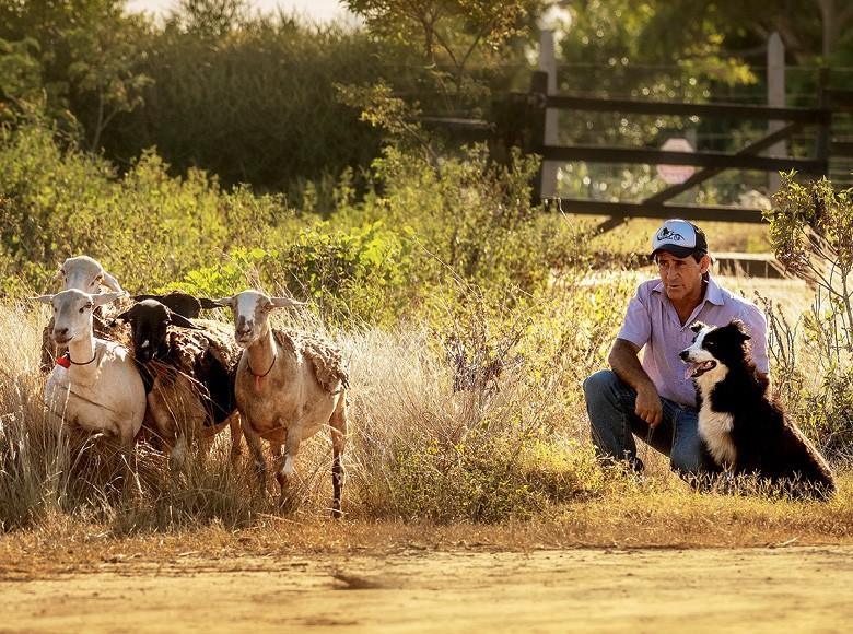 Na foto: Rogério Almeida e a cachorra Funny - Border collie é treinado para conduzir e proteger rebanhos, garantindo o bem-estar animal nas fazendas de pecuária.  (Foto: Ronaldo Rufino)