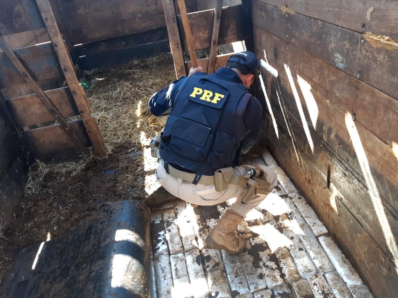 Dupla é presa transportando mais de 800 quilos de maconha em caminhão com cavalos na BR-153