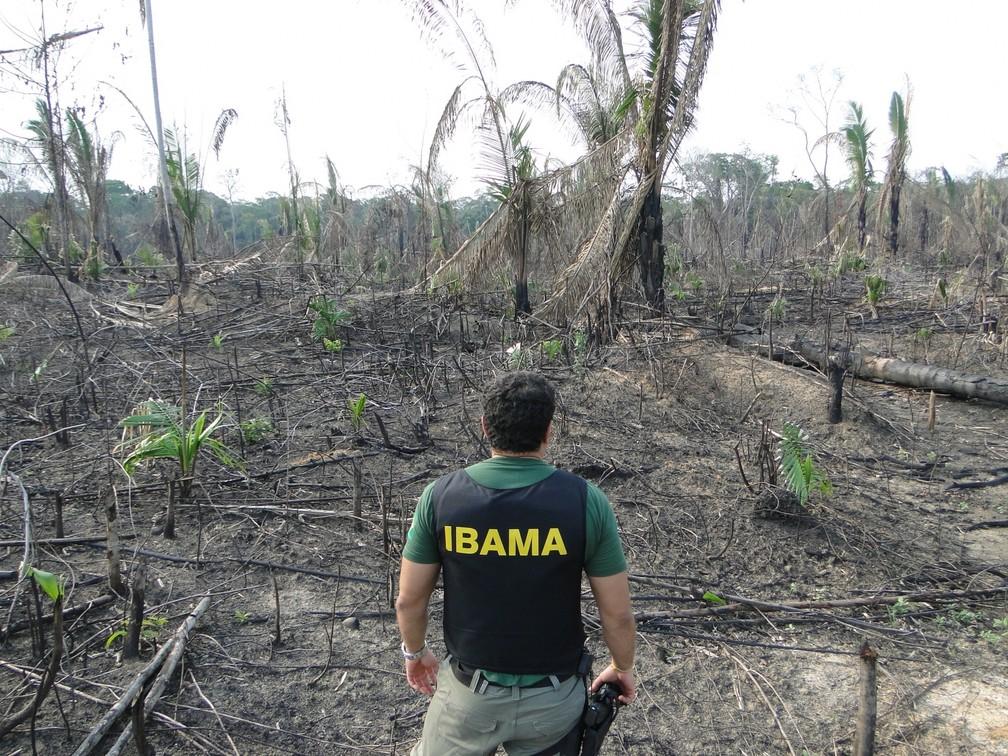 """Operação de fiscalização """"Guardiões da Vida"""" , nos arredores da BR-319/AM, realizada pelo Ibama em 2015 — Foto: Ditec_Ibama / AM"""