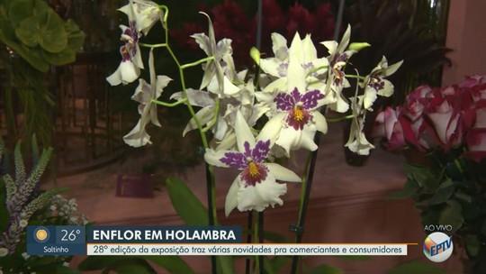 Vaso antidengue e flor perene estão entre as novidades da 28ª Enflor; confira a programação