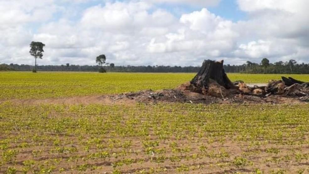 Tentativa de implantação de polo industrial em Belterra favoreceu a expansão da soja — Foto: Gabriel Siqueira/BBC
