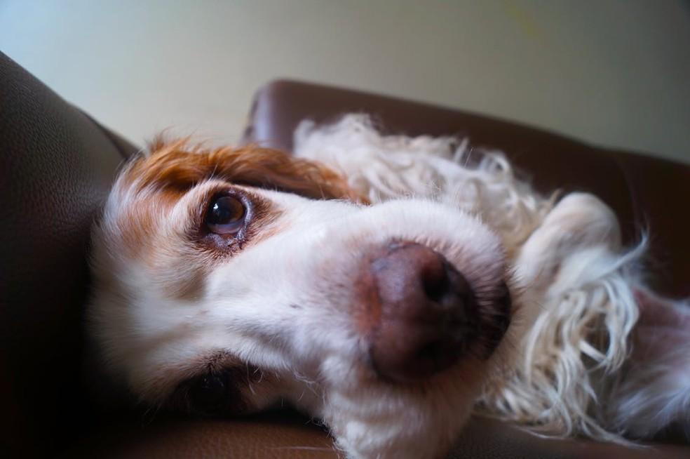 Higiene dos olhos dos cães deve ser feita com soro fisiológico e gaze (Foto: Divulgação)