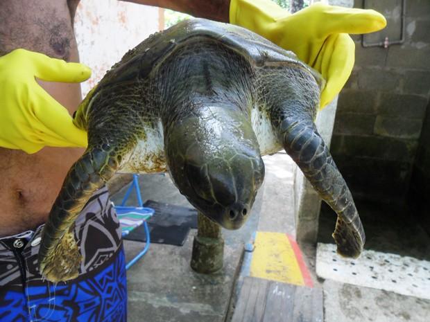 Tartaruga foi encontrada por turistas na manhã desta quarta-feira (8) (Fot Arquivo Pessoal / Cristian Negrão)