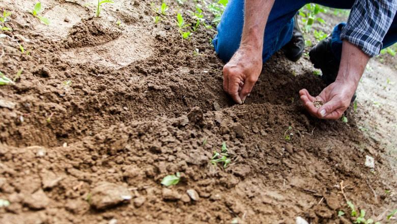 solo-agricultura (Foto:  Binyamin Mellish/Creative Commons)