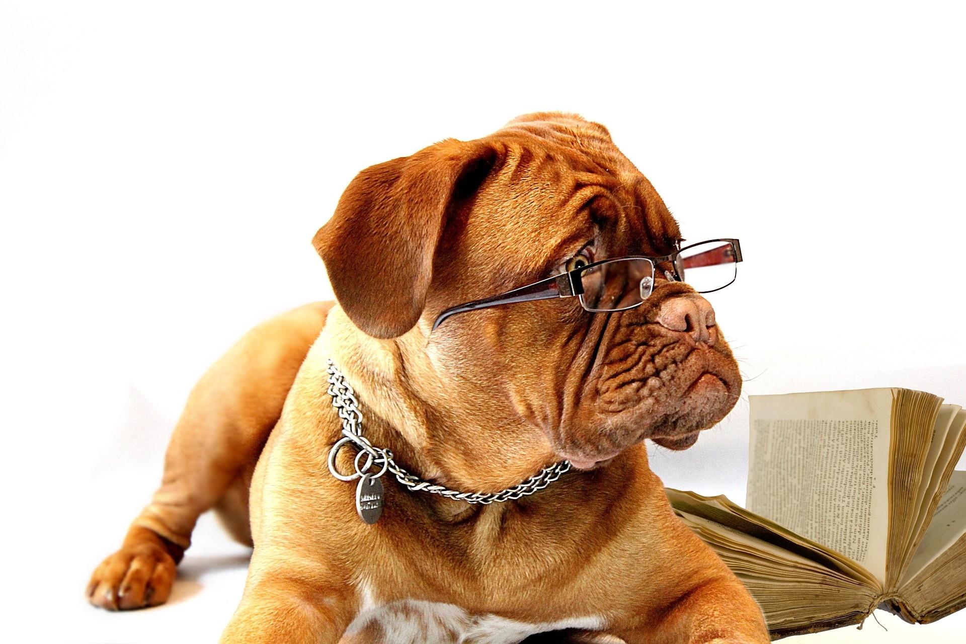 Seu cachorro não é tão inteligente assim.  (Foto: Creative Commons / 940751)