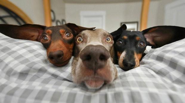 Cachorros do perfil @HarlowAndSage, gerenciados pela empresária (Foto: Reprodução)