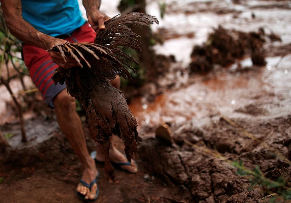 Galinha é retirada da lama depois do rompimento da barragem da Vale em Brumadinho. — Foto: Adriano Machado/Reuters