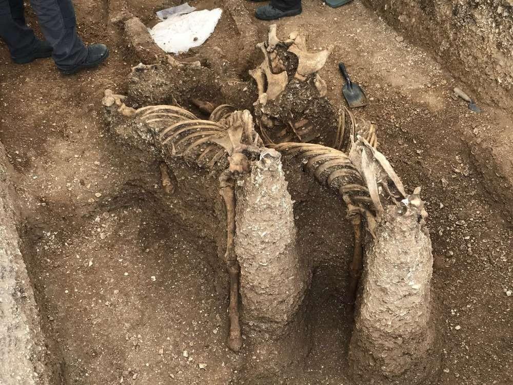 Esqueleto de guerreiro encontrado no Reino Unido (Foto: Divulgação/The Map Archaelogical Project)