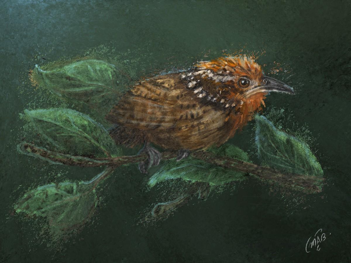 Fauna brasileira é representada por designer em ilustrações digitais