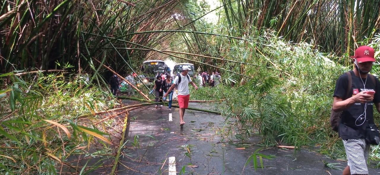 Em dia de chuva forte, bambus que ficam na entrada do aeroporto de Salvador desabam e interditam trânsito