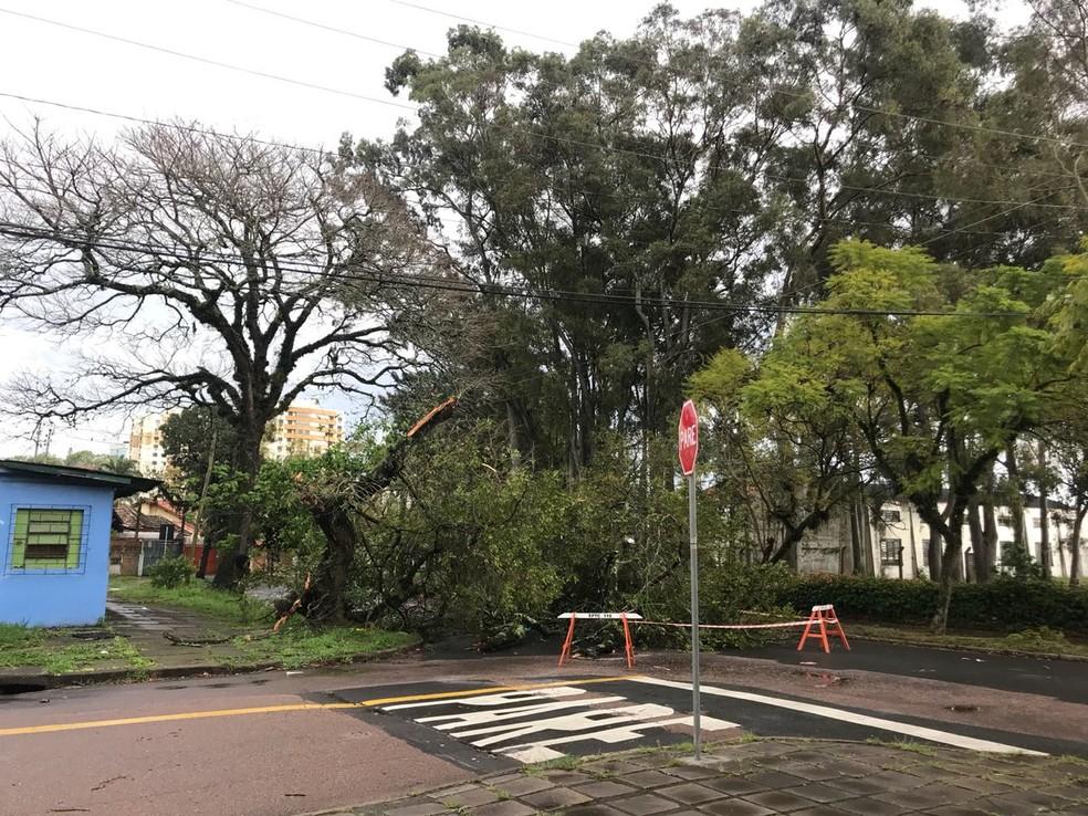 Árvore caída na rua Tamandaré, Zona Sul de Porto Alegre — Foto: Muriel Porfiro/RBS TV