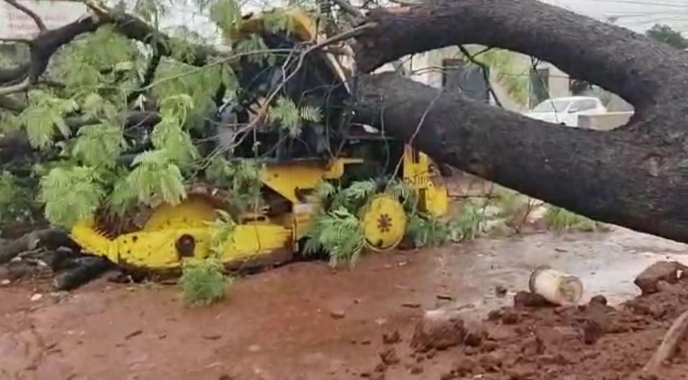 Árvore caiu em cima de trator e feriu motorista em Campo Grande — Foto: Vinicius Santana/Arquivo Pessoal
