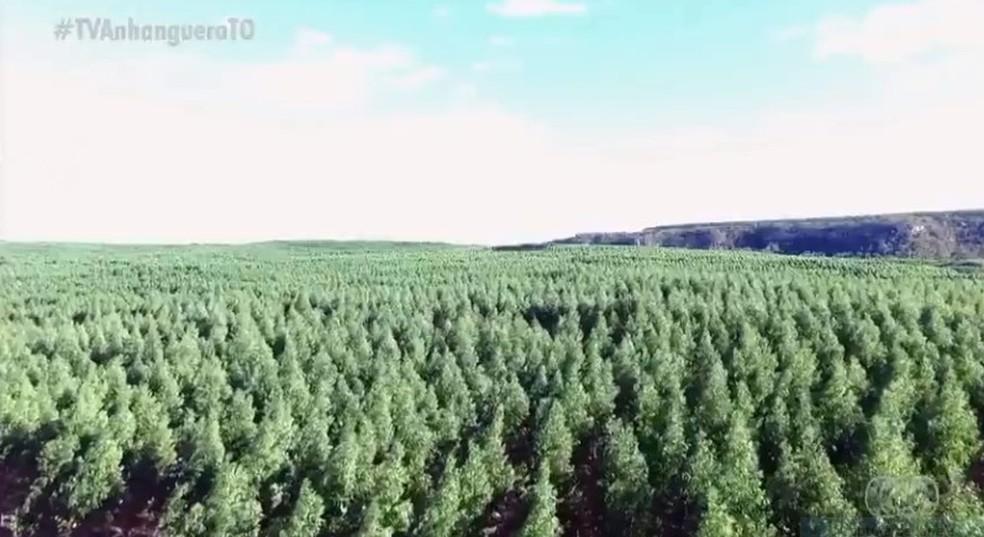 Aumento gera preocupação com meio ambiente — Foto: Reprodução/TV Anhanguera