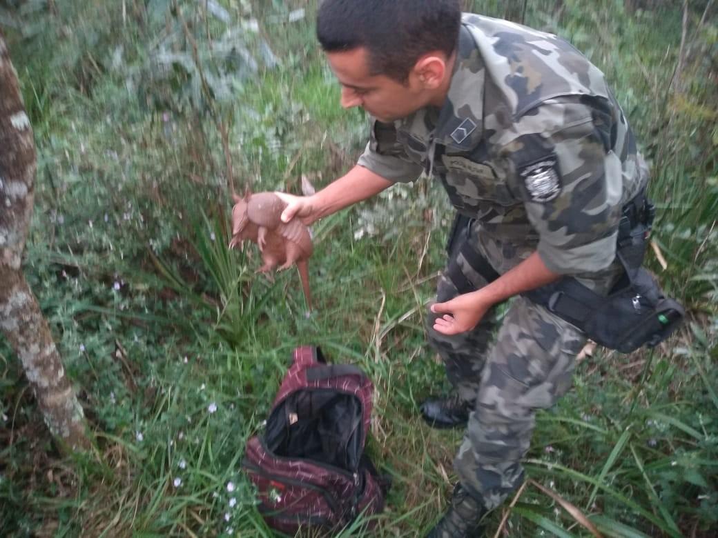 Tatu-mulita é resgatado dentro de mochila de caçadores e devolvido à natureza em SC; FOTOS