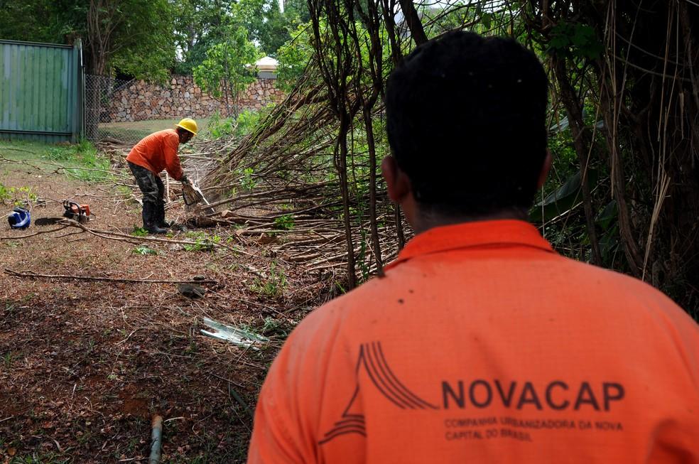 Servidores da Novacap fazem remoção de árvores durante desocupação da orla do Lago Paranoá, em Brasília (Foto: Gabriel Jabur/Agência Brasília/Divulgação)