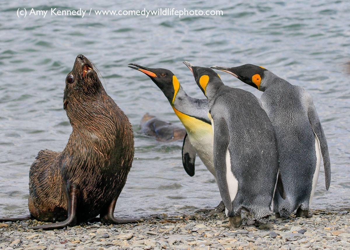 """Sai fora maluco"" (Foto: Amy Kennedy / Comedy Wildlife Photography Awards )"