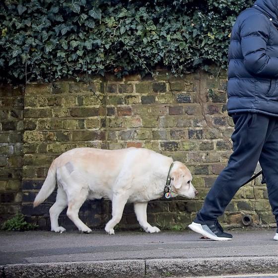 A cadela labrador do cantor inglês George Michael continua arrasada pela perda do dono, morto em 2016 (Foto: Eroteme.co.uk )