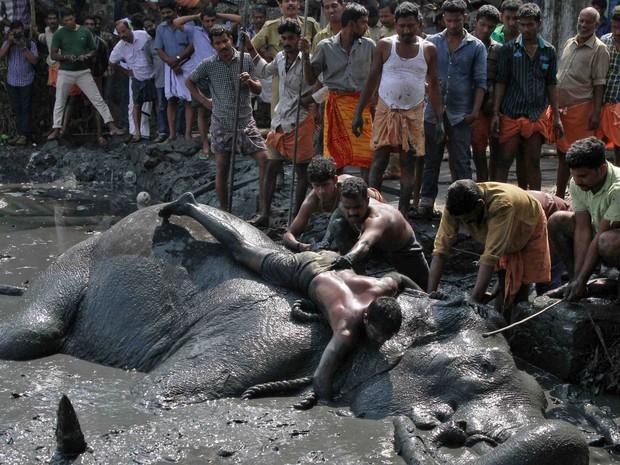 Populares observam a tentativa de resgate do elefante (Fot Sivaram V/Reuters)