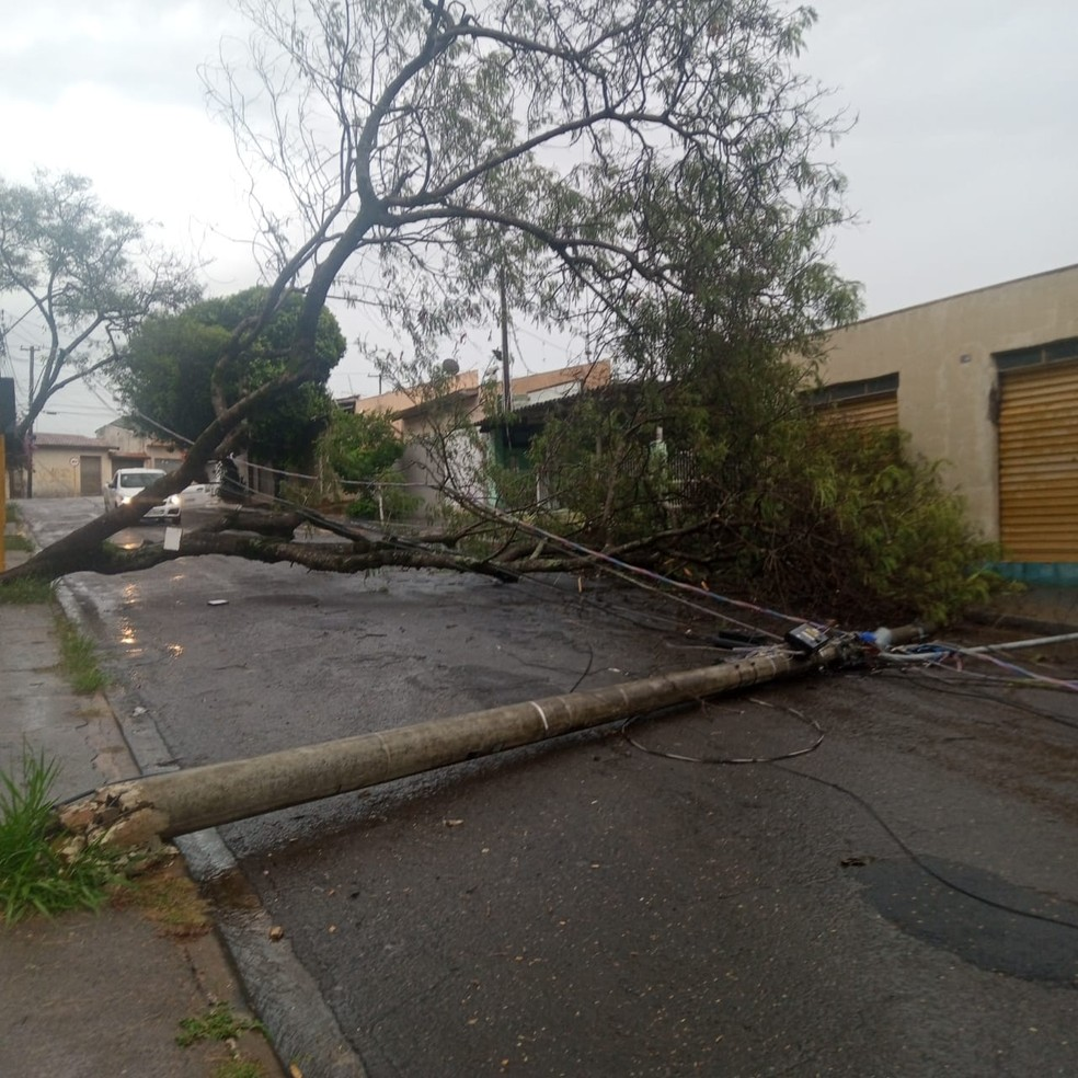 Árvore caiu na quadra 1 da Rua Jamiro Honorato da Silva — Foto: Divulgação