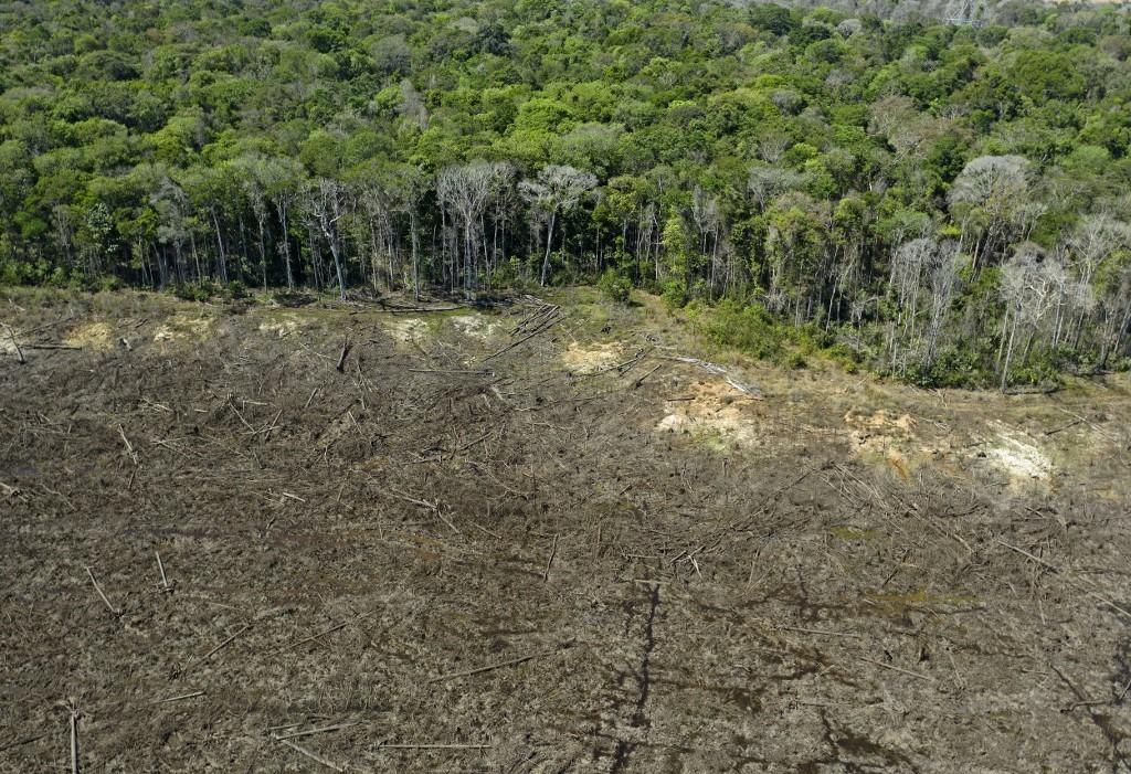 Incêndios na Amazônia deixam rastro de destruição por décadas thumbnail