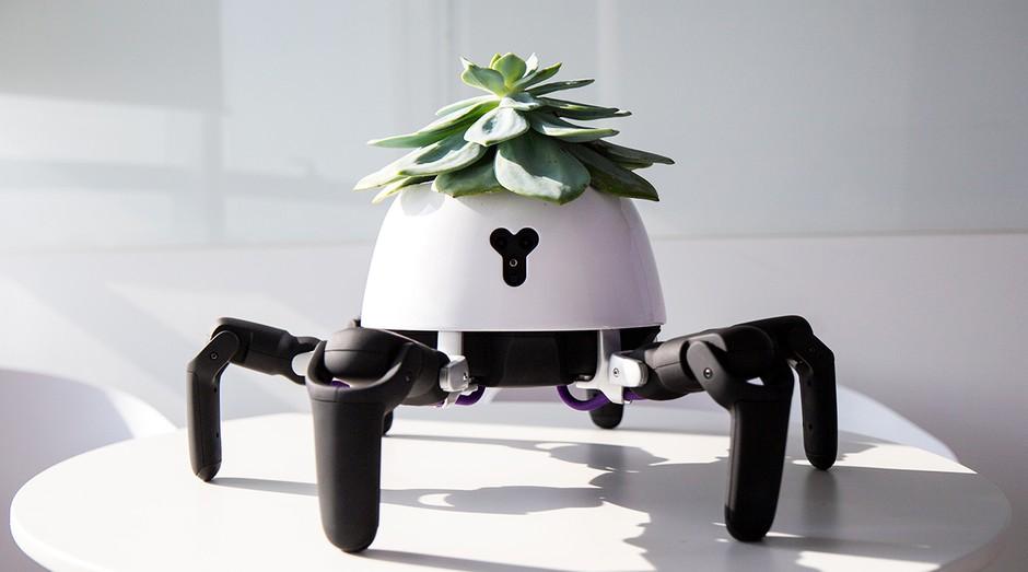 robôs, hexa, planta (Foto: Reprodução/Forum Vincross)