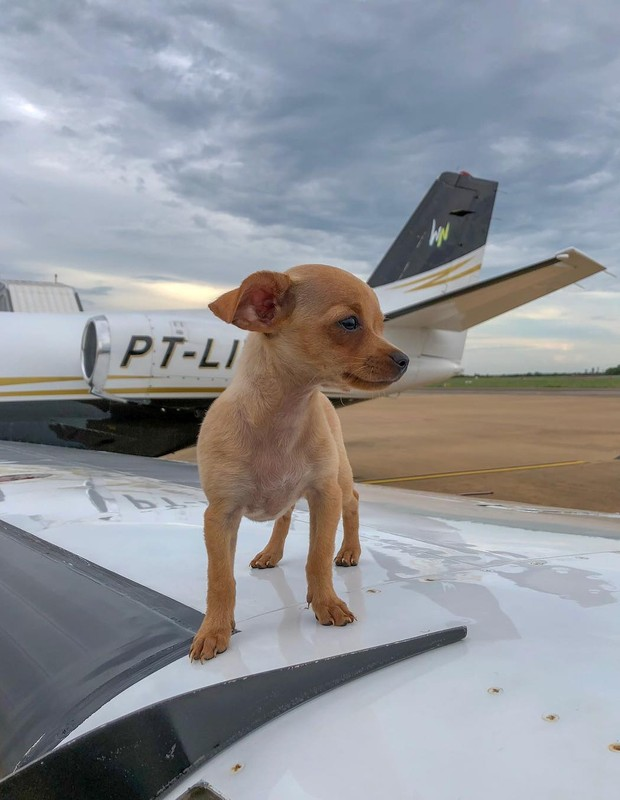 Cachorrinha adotada por Whindersson Nunes (Foto: Reprodução/Instagram)