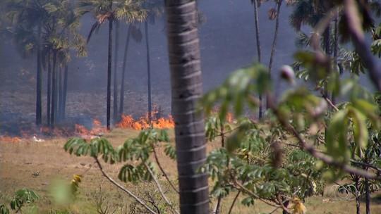Voluntários fazem força-tarefa para combater incêndio no Parque Nacional da Chapada dos Veadeiros