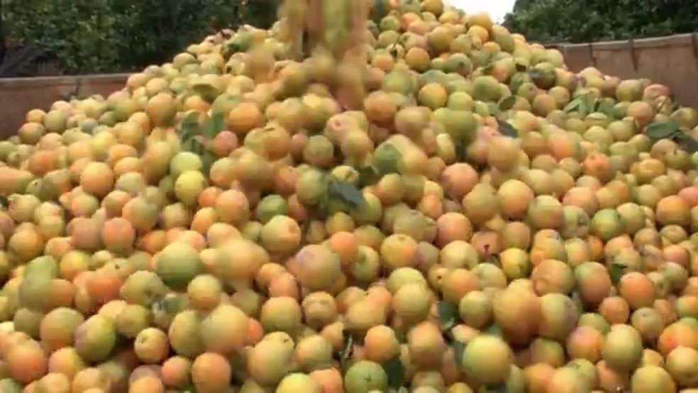 Produção de laranjas no Paraná caiu por causa da estiagem — Foto: RPC/Reprodução
