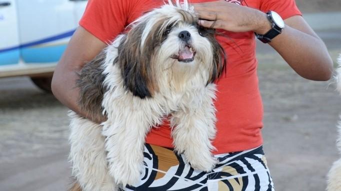 Moradores de Palmas poderão agendar castração gratuita de cães e gatos; veja como
