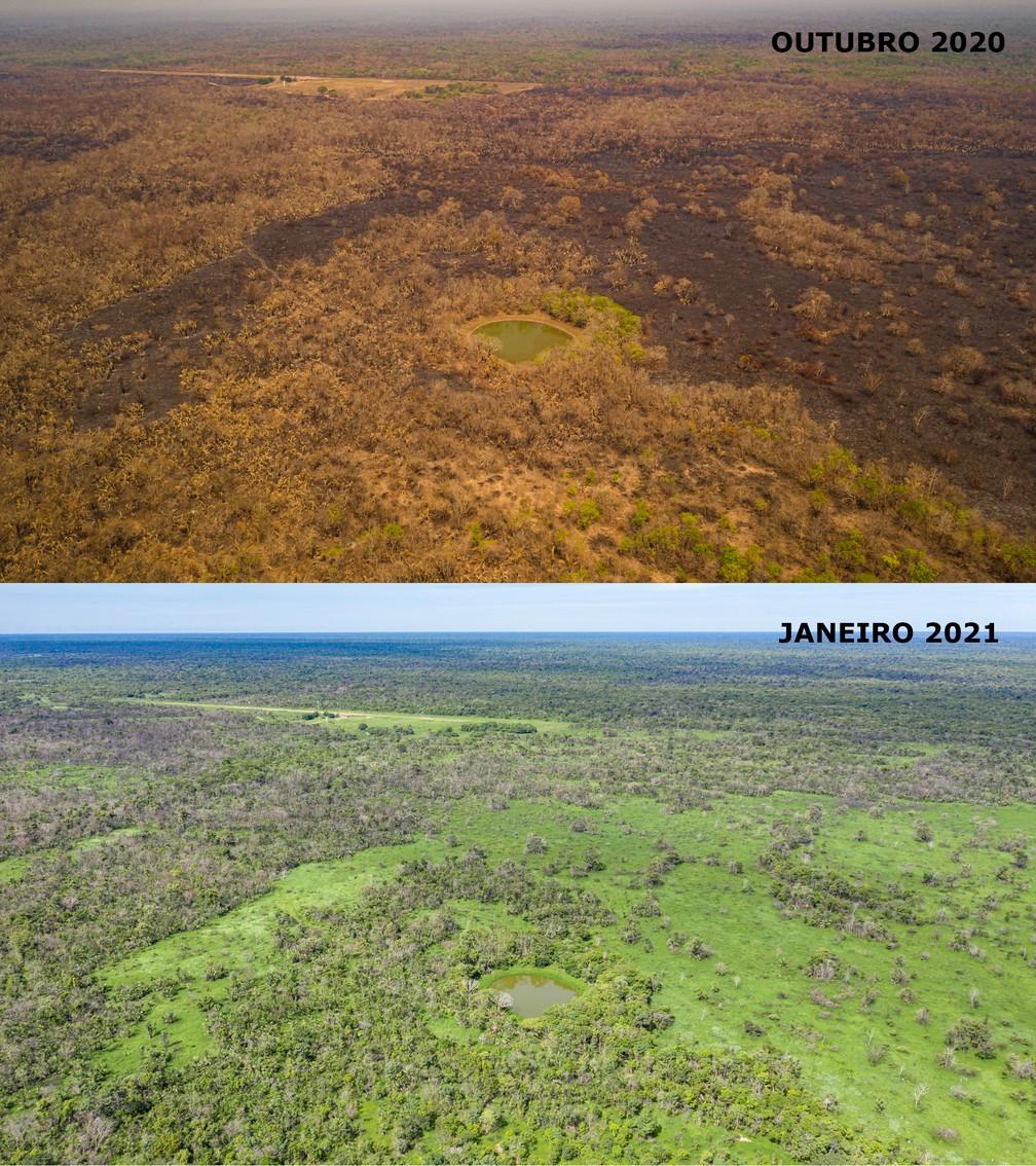 Antes e depois das queimadas no Pantanal de MT — Foto: Gabriela Schuck